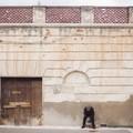 Villa Bonelli, un Passo nel futuro: un questionario per raccogliere le istanze della città