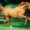 «Salviamo un cavallo che sta per essere abbattuto»