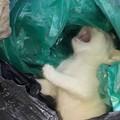 Gatto chiuso in una busta della spazzatura, l'episodio oggi a Barletta