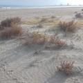 Oggi Legambiente Barletta in azione sulla spiaggia del Jova Beach