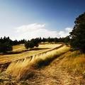 Alla ricerca di erbe spontanee e commestibili, da Barletta verso la Murgia