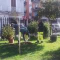 Cresceranno nuovi alberi nei giardini delle scuole di Barletta