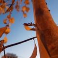 Buona primavera da Legambiente: «Ci prendiamo noi cura degli alberi»