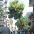 Rimozione pino in via D'Aragona, un pericolo per i cittadini