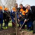 32 nuovi alberi sulla litoranea Mennea grazie al Rotary