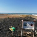 Incendio nell'area protetta del fratino sulla costa di Barletta