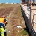 In corso la rimozione dei rifiuti lungo le litoranee di Barletta