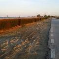 Tra strada e sabbia, a Ponente solo sporcizia (per tacere di chi posteggia)