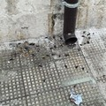 Emergenza sanitaria, invasione di scarafaggi in via Venezia a Barletta