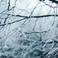 Arriva il freddo da nord-est, allerta gialla per venti e neve su Barletta