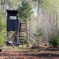 Abusi nei controlli sulla caccia, condannata una guardia di Barletta