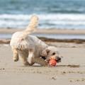 Spiagge animal friendly? «Occorre regolamentare l'accesso degli animali»