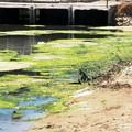 """""""Fortemente inquinata """" la foce del canale di Ponente a Barletta"""