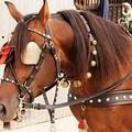 Escursione a cavallo organizzata dall'U.N.I.Vo.C.