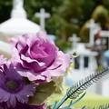 Commemorazione dei defunti, orari e viabilità per il Cimitero di Barletta