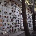 «Molti loculi del cimitero di Barletta sono sprovvisti di scale scorrevoli»