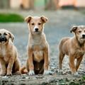 100 associazioni animaliste in Regione contro il decreto sul randagismo