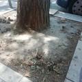 """""""Canem stercore street"""": meglio conosciuta a Barletta come viale Marconi"""