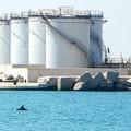 Avvistamento di delfini nel porto di Barletta