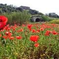 Il treno dell'archeologia e dell'ambiente sulla ferrovia Barletta-Spinazzola