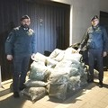 Sequestrati 110 kg di marijuana a Barletta, in arresto un corriere