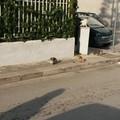 La colonia di gatti invade il marciapiede di via Puccini
