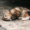 Gattini ritrovati in un sacco della spazzatura a Barletta: «Salvati da morte certa»