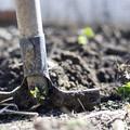 Disoccupazione agricola, ne parlerà a Barletta la Flai Cgil Bat