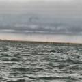 Maltempo si abbatte su Barletta, avvistati tornado in mare