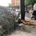 Temporale estivo su Barletta, crolla un albero in piazza Conteduca