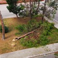 Forte vento a Barletta, si contano i danni