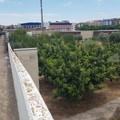 Caracciolo: «Orto botanico di Barletta, avanti con il piano di caratterizzazione»