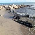 Rimossi scarti di opifici sulla costa di Barletta in contrada Le Paludi