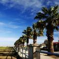 Jova Beach Party, la denuncia di LIPU: «Anche a Barletta impattante»