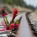 Strage ferroviaria, il grido di giustizia: «Sia fatta luce sulla tragedia»