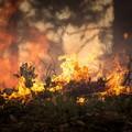 A Barletta arriva l'ordinanza contro il rischio di incendi