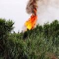 Pomeriggi di fuoco nelle campagne della Murgia