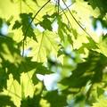 Nessun albero monumentale a Barletta, la Consulta Ambiente promuove un'iniziativa