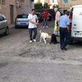 Maltrattamenti in famiglia e su animali: arrestata una 46enne di Barletta