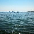 Schiuma in mare, «mi sento estremamente inerme»