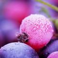 Agricoltura, pericolo ghiaccio anche nella provincia Barletta-Andria-Trani