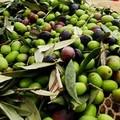 Nessun contributo ambientale è dovuto per l'olio extra vergine d'oliva