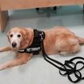 Coccole per guarire, la pet therapy arriva all'ospedale di Barletta
