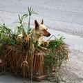 Sacchetti gratis (?) per cani incivili... incivili i padroni piuttosto