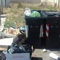 I rifiuti si moltiplicano e i topi fanno visita