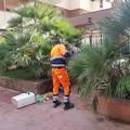 Mancata raccolta dei rifiuti a Borgovilla, scatta la denuncia