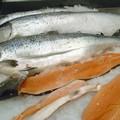 Rifiuti speciali, chiarimenti per pescherie e macellerie di Barletta