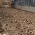 Zona 167 tra sporcizia e degrado, le immagini di un lettore