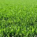 Barletta avrà un regolamento su manomissioni e ripristini di suolo e sottosuolo