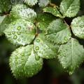 Da mercoledì trattamenti fitosanitari sul patrimonio arboreo di Barletta